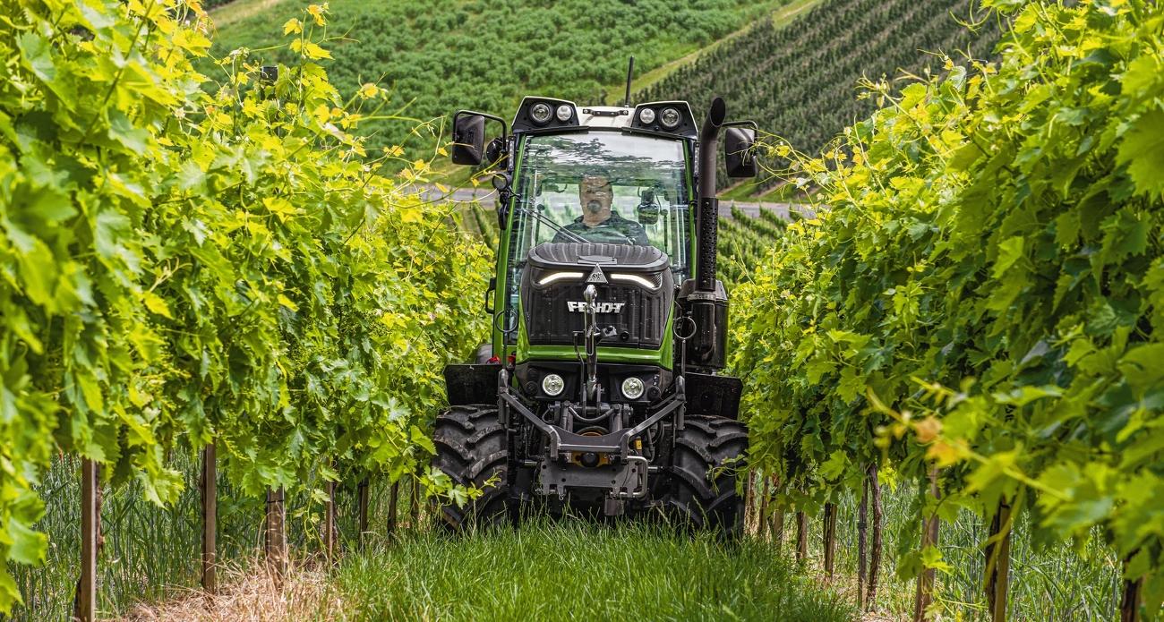 Nahaufnahme im Weinberg zwischen den Weinstreben
