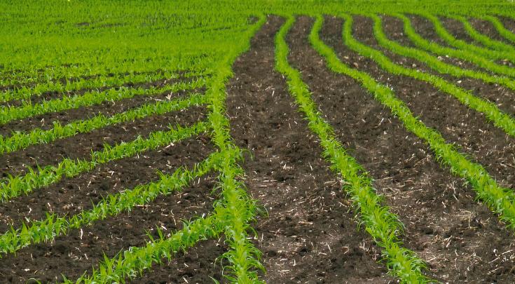 Mit SectionControl bearbeiteter Acker für Getreide mit Vorgewende