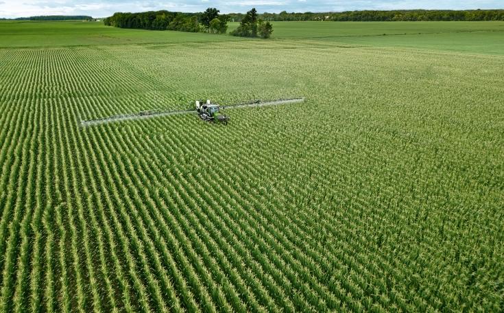 Fendt Rogator 900 beim spritzen von einem Maisfeld