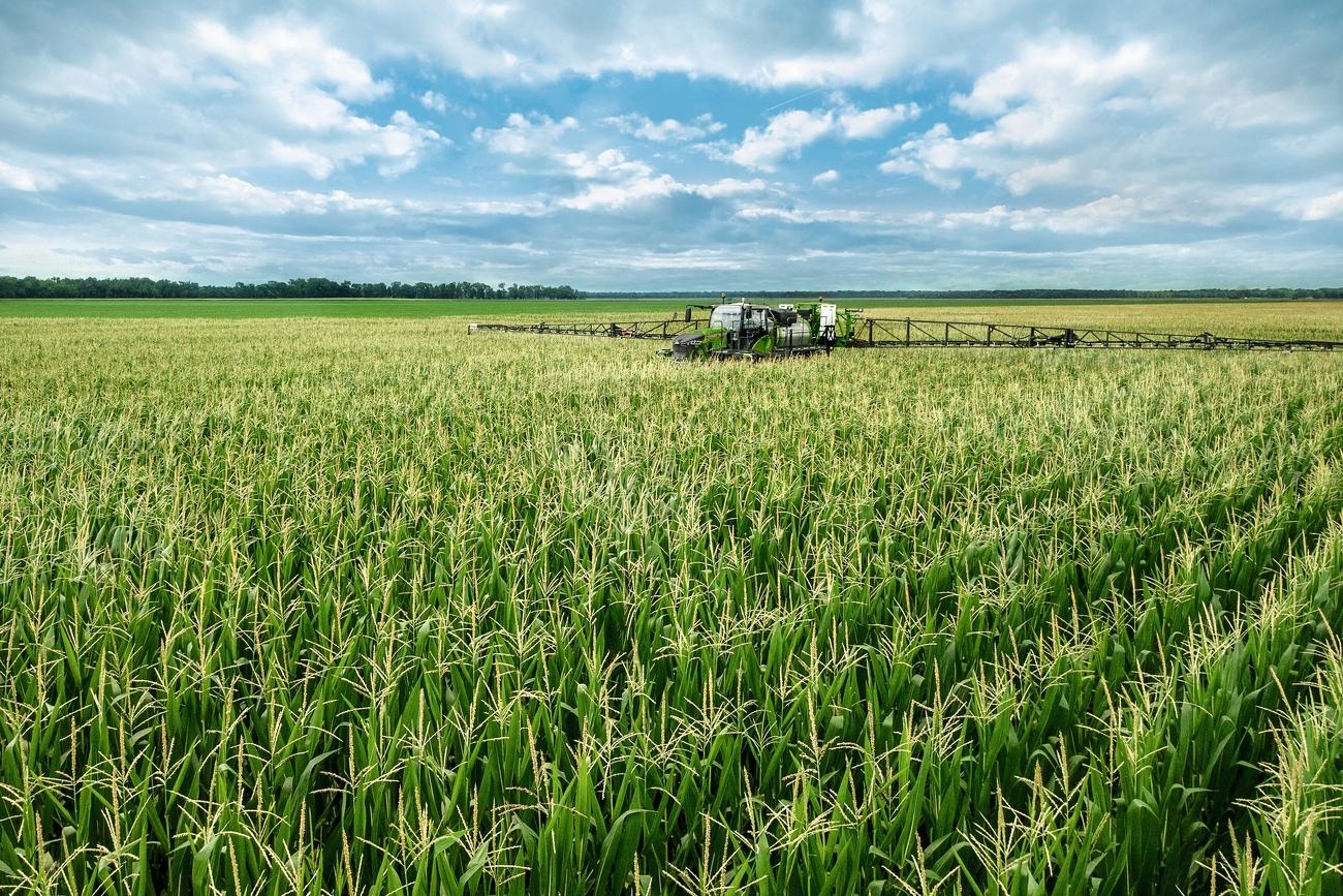 Fendt Rogator 900 beim spritzen von einem Maisfeld von vorne